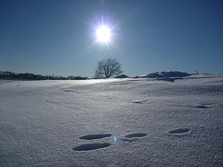 うさぎの足跡02(2011.1.27)