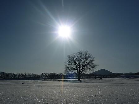 上坊牧野の一本桜01(2011.2.2)
