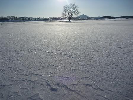 上坊牧野の一本桜02(2011.2.2)