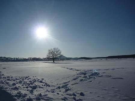 上坊牧野の一本桜04(2011.2.2)