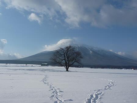 上坊牧野の一本桜01(2011.2.3)