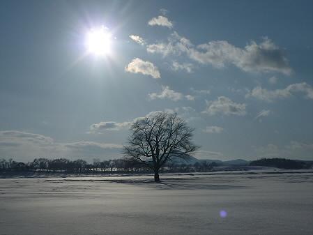 上坊牧野の一本桜02(2011.2.3)