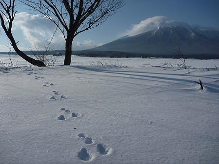 上坊牧野のウサギ足跡02(2011.2.3)