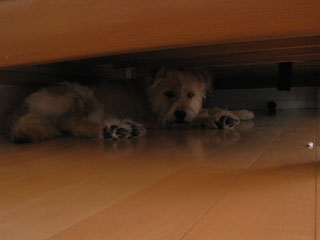 under-the-bed1.jpg