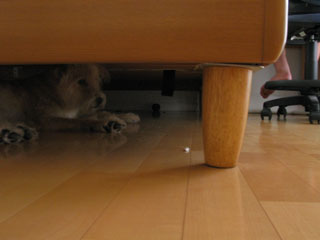 under-the-bed2.jpg