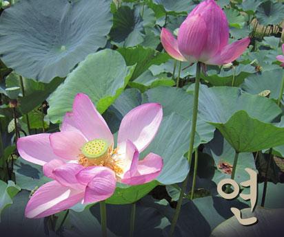 web-photo-20120806.jpg