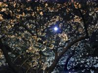 BL0331夜桜2BRIMG1417