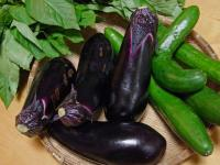 BL0811夏野菜1R1005051