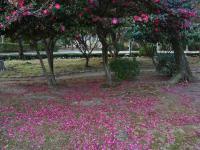 BL110213鶴舞公園2R1019215