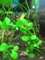 Shrimp1302.jpg