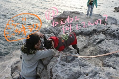 白浜 2011-045