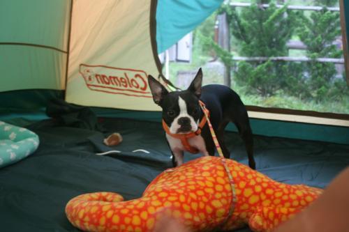 Camp+2010-170_convert_20100818004405.jpg