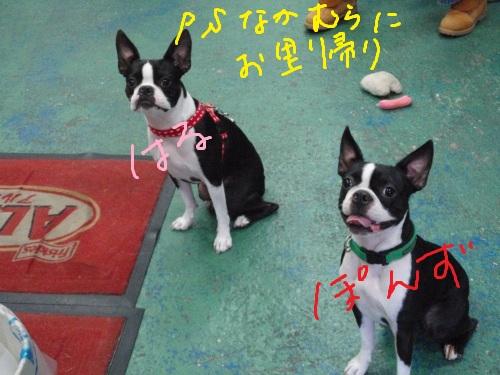 PA100093_20101231032430.jpg
