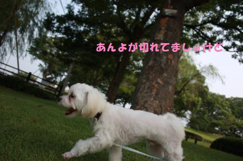 IMG_3106_convert_20100801085440.jpg