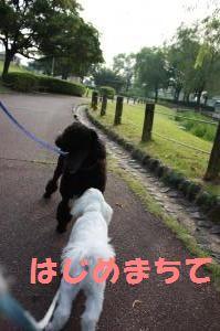 IMG_3109_convert_20100801085724.jpg