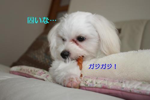 IMG_3195_convert_20100811083853.jpg