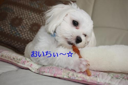 IMG_3196_convert_20100811084055.jpg