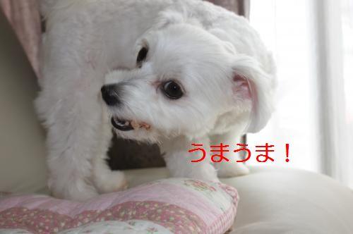 IMG_3215_convert_20100811085059.jpg