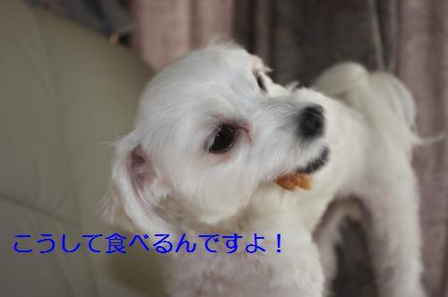 IMG_3218_convert_20100811085329.jpg