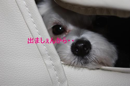 IMG_3637_convert_20100905124927.jpg