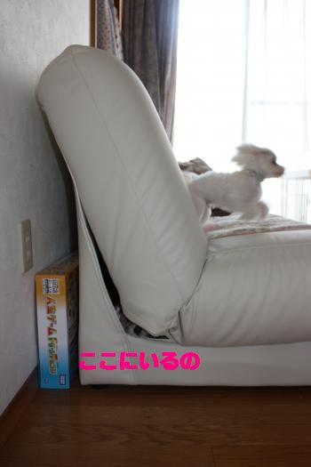 IMG_3638_convert_20100905125048.jpg