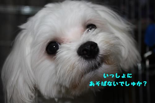 IMG_3838_convert_20100925225313.jpg