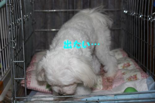 IMG_3844_convert_20100927230735.jpg