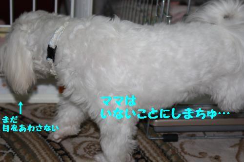IMG_3846_convert_20100927231127.jpg