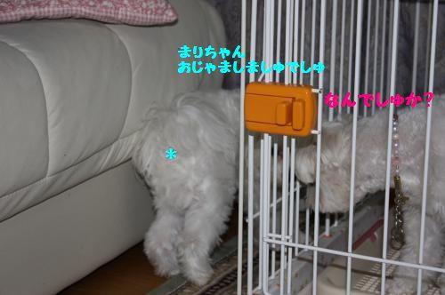 IMG_3848_convert_20100927231536.jpg