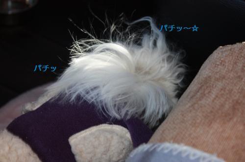 IMG_6162_convert_20110125175756.jpg