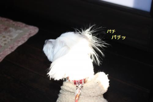 IMG_6187_convert_20110125175645.jpg