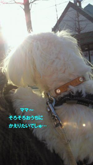 NEC_0227_convert_20110215174621.jpg