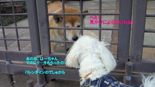 NEC_0240_convert_20110215215155.jpg