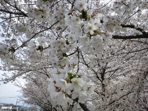 Apr_7_2012_607.jpg