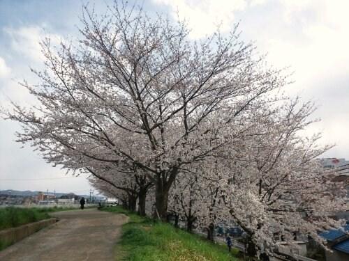 Apr_7_2012_649.jpg