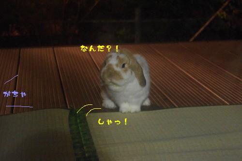 IMGP0194.jpg