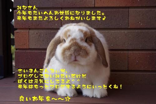 IMGP6837_20121231140541.jpg