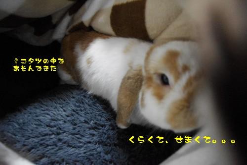 IMGP6879.jpg