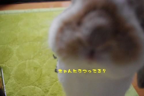 IMGP7124.jpg