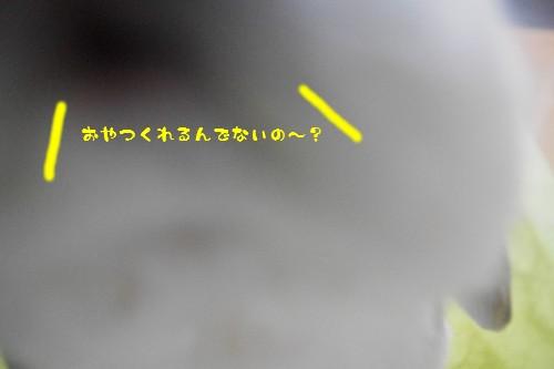IMGP7136.jpg