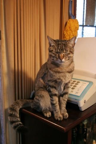 三十路女 家持ち ネコ持ち ネコ持ち シーズン2-万人
