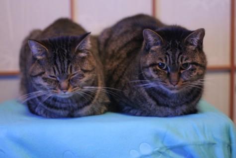 三十路女 家持ち ネコ持ち ネコ持ち シーズン2-いってらっさい