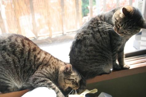 三十路女 家持ち ネコ持ち ネコ持ち シーズン2-かぷっ