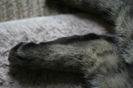 三十路女 家持ち ネコ持ち ネコ持ち シーズン2-エクレア