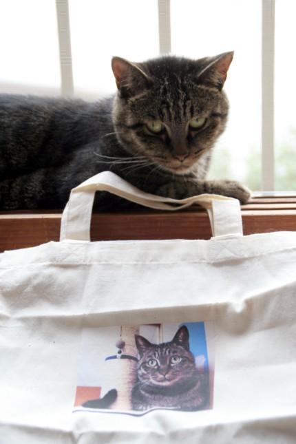 三十路女 家持ち ネコ持ち ネコ持ち シーズン2-被写体 白と黒は撮りにくい