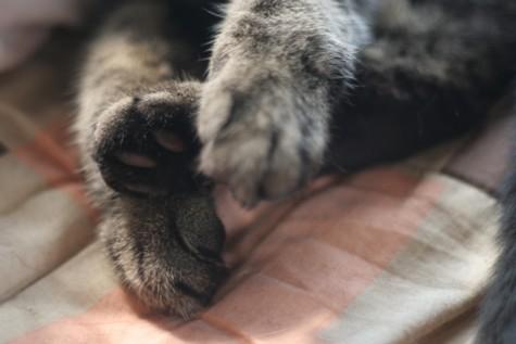 三十路女 家持ち ネコ持ち ネコ持ち シーズン2-ばびゅーーん