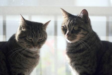 三十路女 家持ち ネコ持ち ネコ持ち シーズン2-ありがと