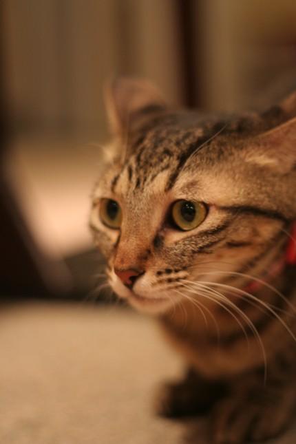 三十路女 家持ち ネコ持ち ネコ持ち シーズン2-きにょは聞きたくないよ