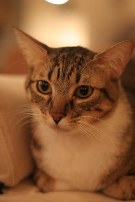 三十路女 家持ち ネコ持ち ネコ持ち シーズン2-女の子はかわいいな