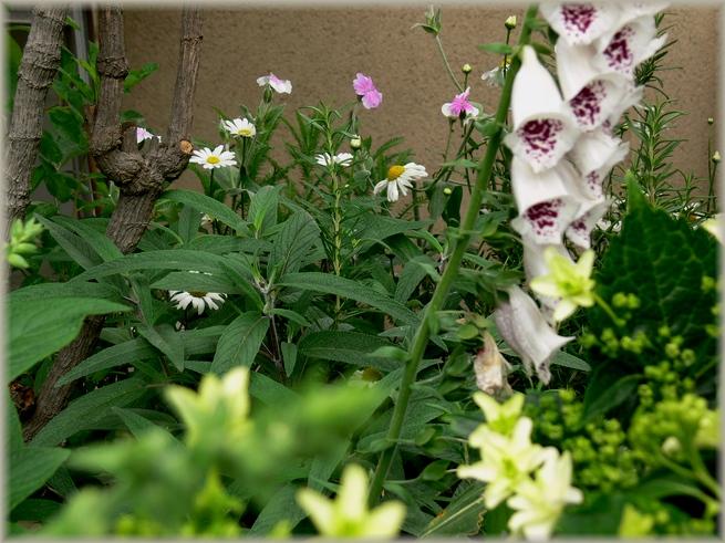 6月1日の庭1